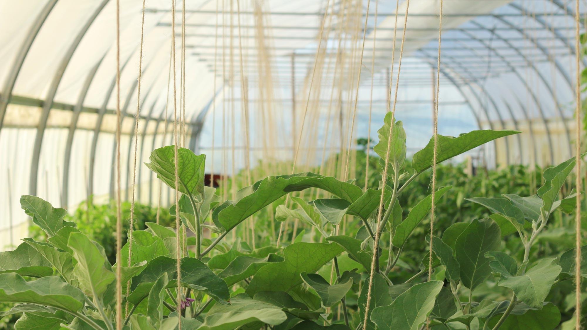 Que Planter En Octobre Sous Serre la construction d'une serre | horticulture ornementale