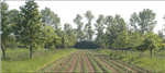 Agroforestry: Reconciling Production with Protection of the Environment. A Synopsis of Research Literature.