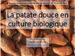 La patate douce en culture biologique