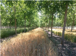 Extent and Success of Current Policy Measures to Promote Agroforestry across Europe